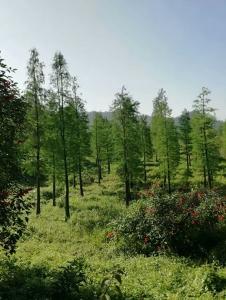 园林苗木种植