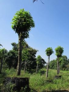 园林苗木种植基地