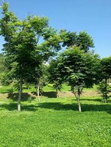 苗木绿化批发基地