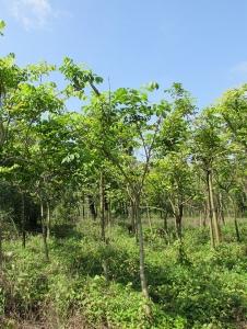 苗圃绿化基地
