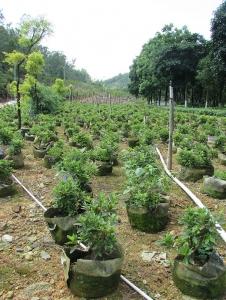 苗圃绿化养护